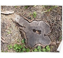 Overhead view of an old stump of cut tree Poster