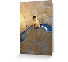 Lonely Kitten - Mozambique Greeting Card