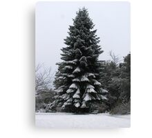 Winter Fir Tree Canvas Print