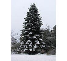 Winter Fir Tree Photographic Print