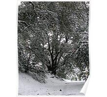 Winters Walk Poster