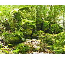 Forestry Photographic Print
