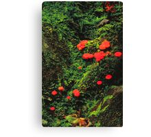 SCARLET WAXYCAP Canvas Print