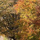 Autumn Trees by Peter Lawrie