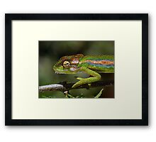 Gaudy camouflage........ Framed Print