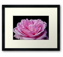 Pink Petals Framed Print