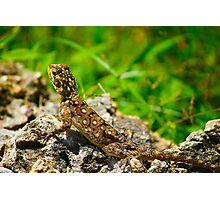 Colourful lizard in Nairobi Safari Park, KENYA  Photographic Print