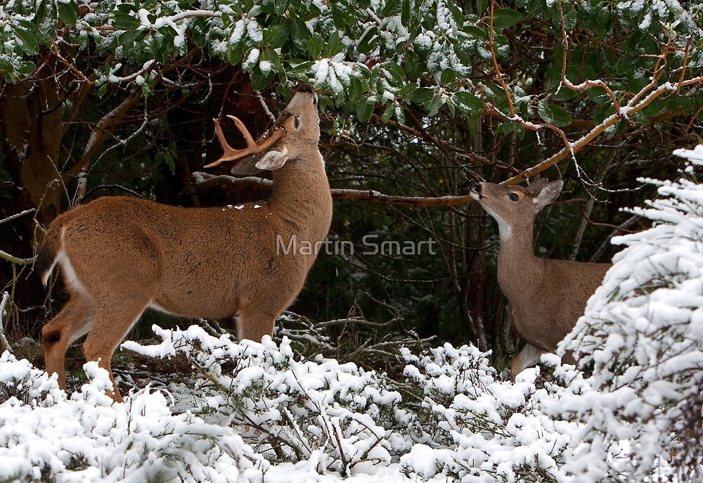 A Moment to Share by Martin Smart