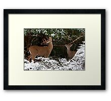 A Moment to Share Framed Print