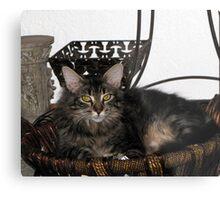 Maine Coon- Kitty Metal Print