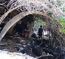Dead TrEEs Tunnel by Joni  Rae