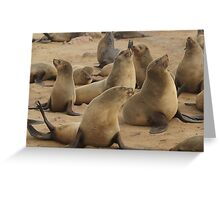 Pretty Brown Fur Seal Greeting Card