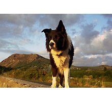 Evening walk with  Indy Photographic Print