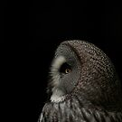 Owl 1 by mickeyb