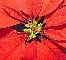 Happy Holidays by Monnie Ryan