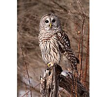 On Bended Knee / Barred Owl Photographic Print