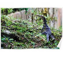 Two-striped Water Monitor - Varanus salvator bivittatus Poster