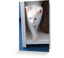 White Kitten Greeting Card