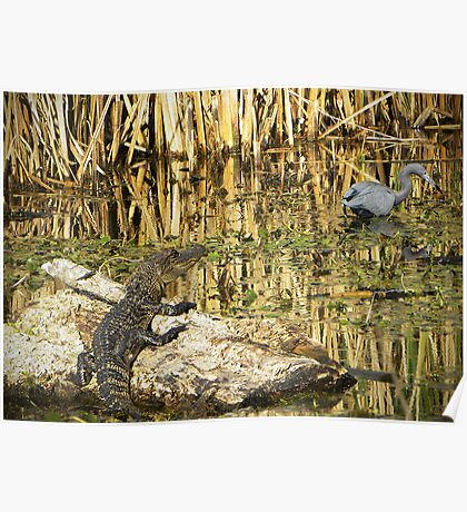 Young Gator Poster