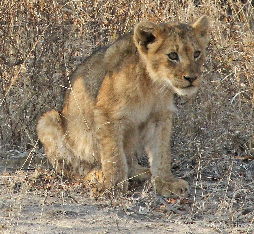 Ximungwe cub(Mom what is downthere ?) by jozi1