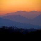 Last flight at sunset by annalisa bianchetti