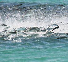 FISH FRENZY by TomBaumker