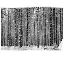 Black & White Pine Poster