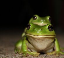 Froggy Style2 by Cathie Trimble