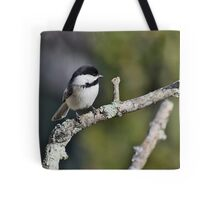 Black-capped chickadee perched on a branch Tote Bag