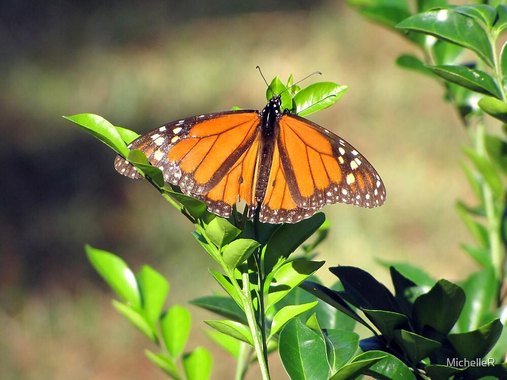 Butterfly Beauty by MichelleR