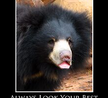 ZooTips: Always Look Your Best by Angie Dixon