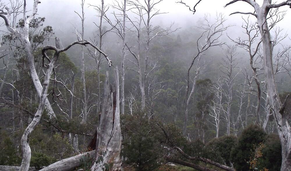 fog in the bush by Cradle Mt by gaylene