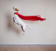 Super Dog by Catherine Holmes