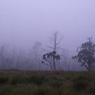 bluish fog in bush - Cradle Mt by gaylene