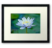 True Blue - waterlilly Framed Print