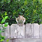 Poppin' in to Say Hello! by MichelleR