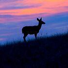 Oh Deer! by Christina Apelseth