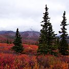 The Colors Of Denali - Alaska by Melissa Seaback