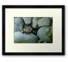 AMONG ROCKS Framed Print