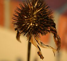 Autumn Cone Flower by Guinevere White