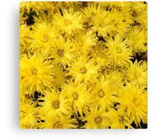 Bushel of Yellow Flowers Canvas Print