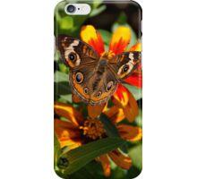 Buckeye Butterfly iPhone Case/Skin