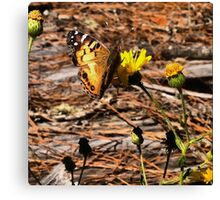 Butterfly on Yellow Flowers Canvas Print