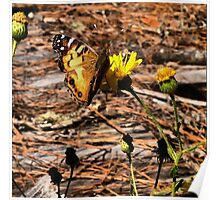 Butterfly on Yellow Flowers Poster