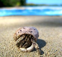 Hermit crab - Tonga by Ainslie Fraser