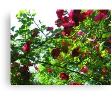 The Last of Summer Canvas Print