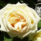 The Joy of a Single Rose by Beverley  Johnston