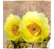 Butter yellow Peonies, floral art Poster