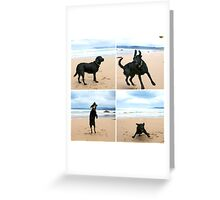 Omar at Apollo Bay Greeting Card