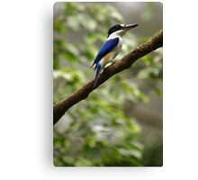 Forest Kingfisher Canvas Print